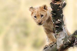 Kenya Uganda Tour Safari – Combined Safari
