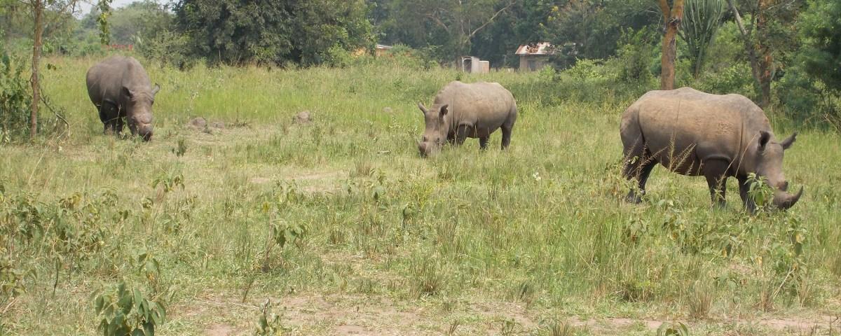 rhino cropped