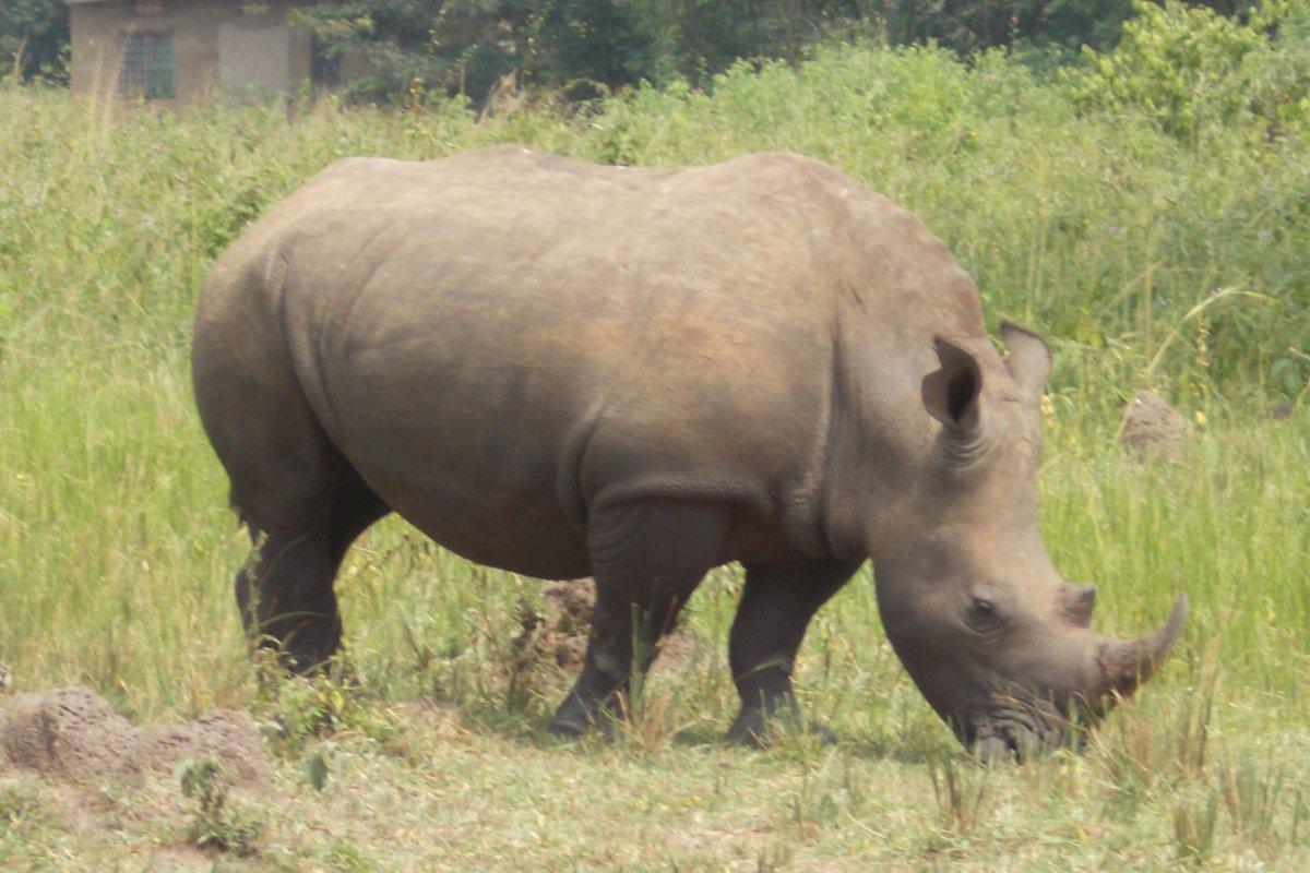 ziwa rhino sanctuary - murchison falls safari - big 5