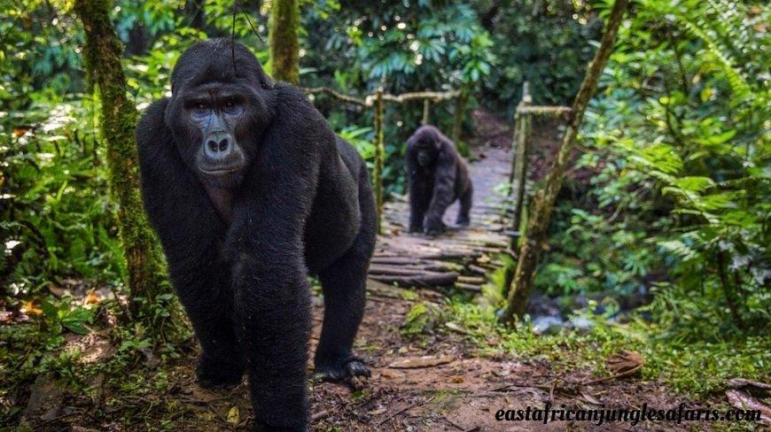 Uganda Destinations