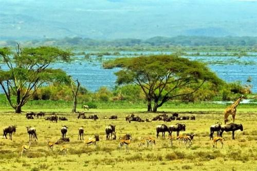 Crescent Island Naivasha