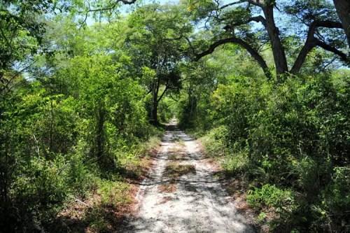 Malindi - Arabuko Sokoke Forest