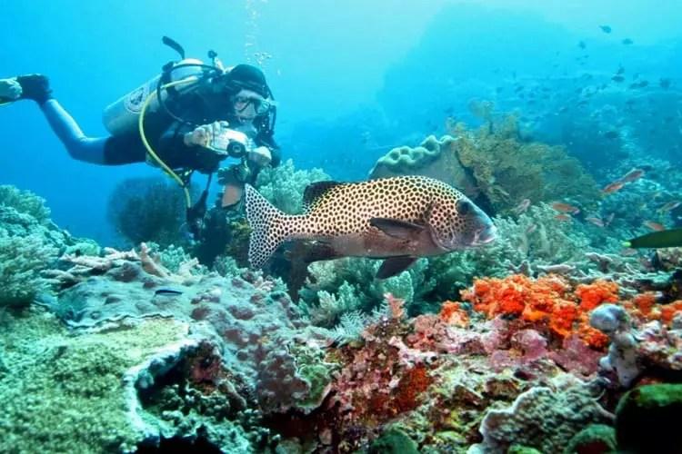 Scuba Diving, Watamu