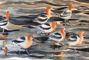 American Avocets by Mel Collins