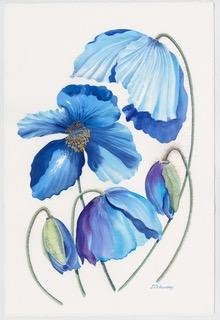 Blue Tulip. Watercolour by Denise Schoenberg