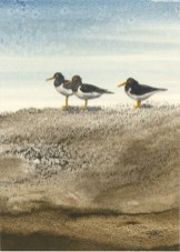 *SOLD* Oystercatchers by Jan Couling