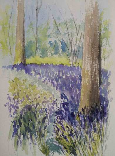 Bluebell Wood near Clare by Jan Couling