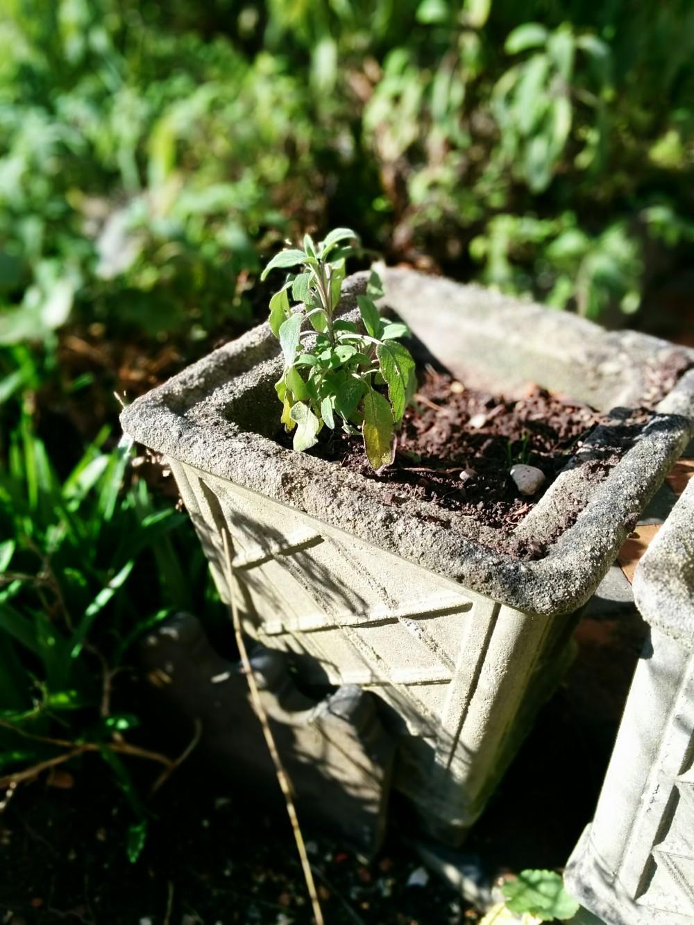 garden planter / eastbourne garden