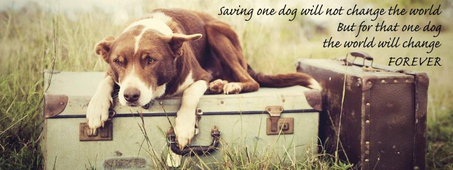 Image result for dog rescue