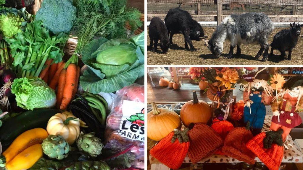 LESTER'S FARM MARKET veggies petting zoo and pumpkin hats