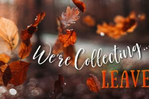 We're Collecting LEAVES from Canada's EAST Coast