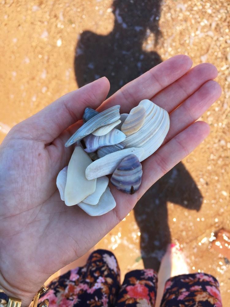Cavendish Beach Seashells