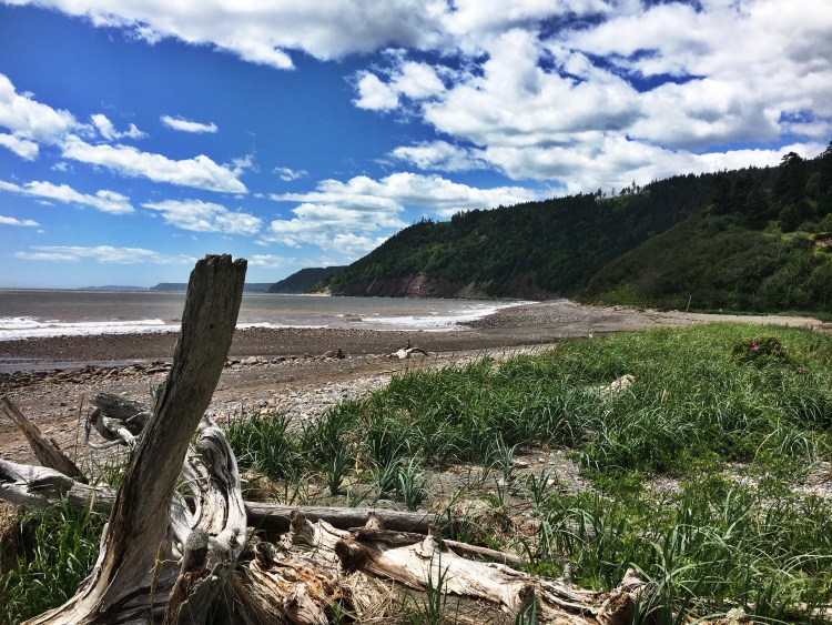 Driftwood Long Beach 2 - Fundy Trail Parkway