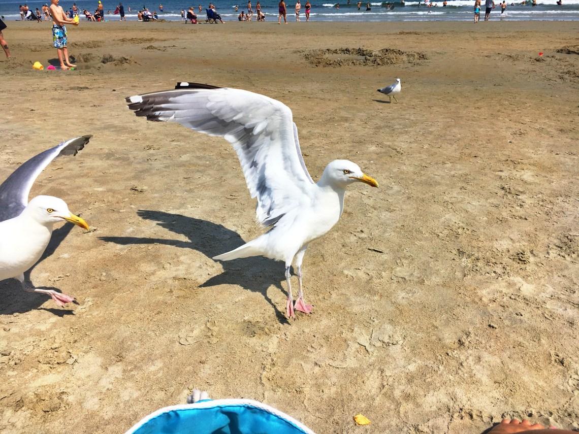 old-orchard-beach-seagull-east-coast-mermaid