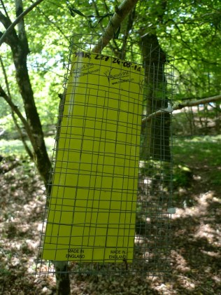Sticky trap to collect flying insects