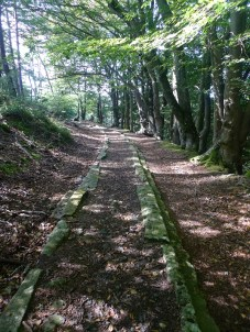 The granite tramway in Yarner Wood
