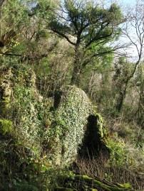 Remains of Boveycombe (photo: Matt Parkins)