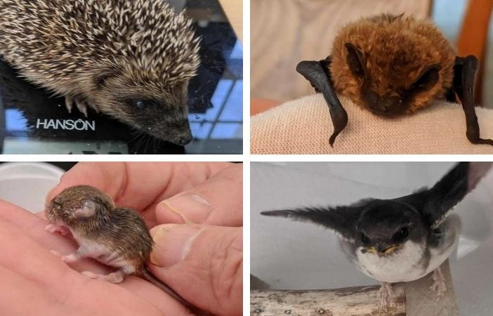 Some of the animals cared for by Wild Woodbury in East Devon.