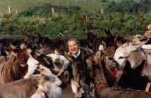 Dr Elisabeth Svendsen MBE surrounded by her beloved donkeys. Photo: The Donkey Sanctuary
