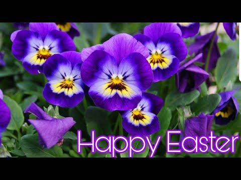 Happy Easter 2021 HD Photos