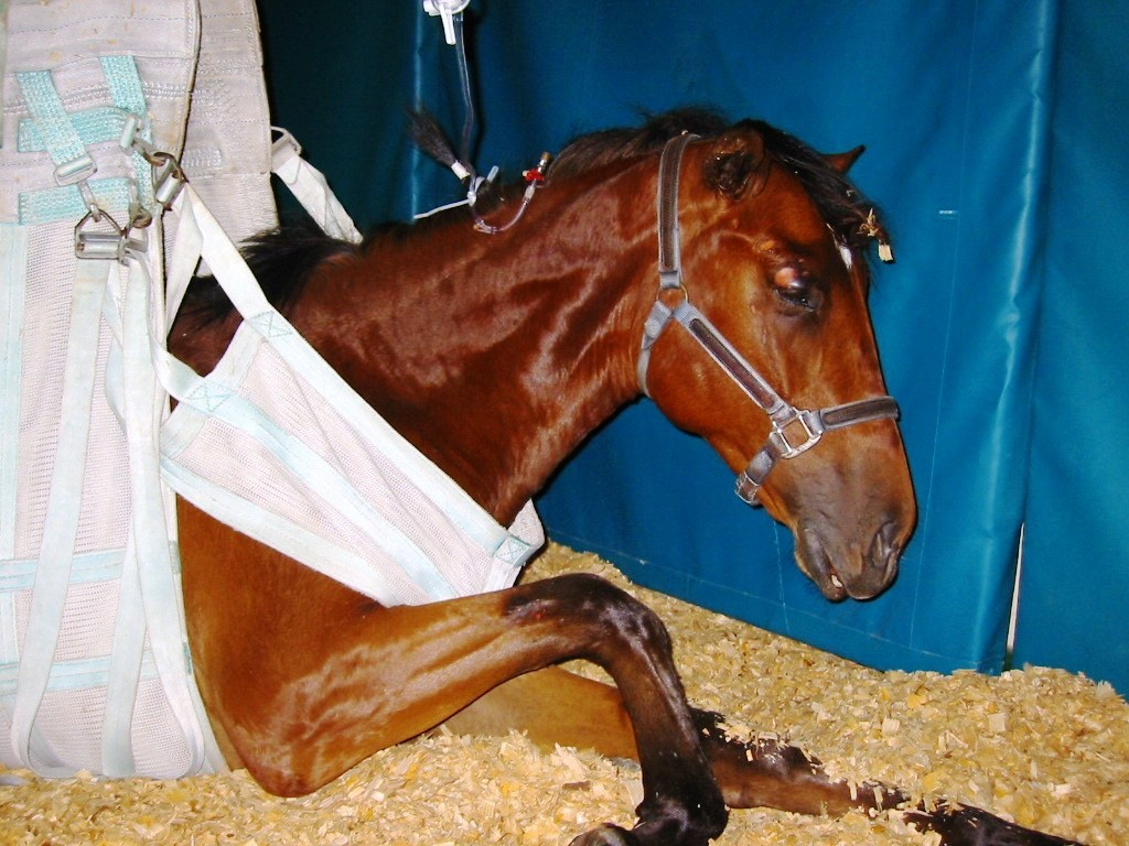 Eastern Equine Encephalitis Michigan