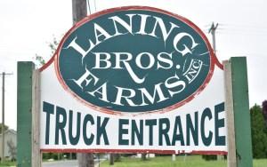 laning-pic.jpg