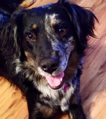 Montana - Adopted 2014!