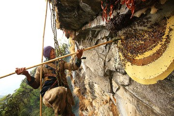 honey hunting trekking in pokhara