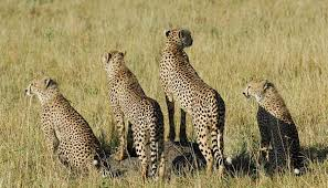 4 days Tsavo east-west-amboseli safari-eastern vacations