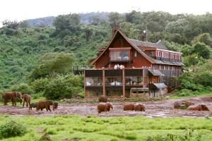Consider taking this 6 Days Kenya Safari package -a memorable experience
