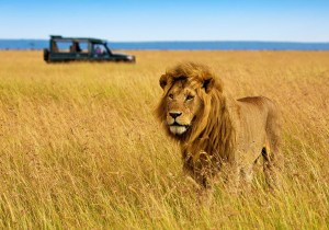 6 Days Lake Nakuru-Masai mara-Amboseli-Tsavo west safari tour