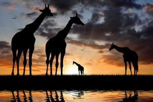 2 Days Tsavo East National Park safari -from kenya beach resorts