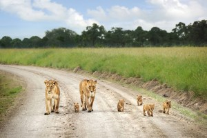 6 Days Lake Nakuru Masai mara Amboseli Tsavo west -Nature and wildlife safari