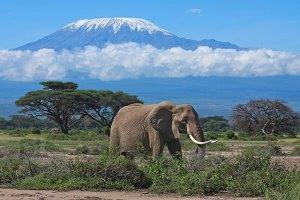 Wildlife Kenya Safari tours