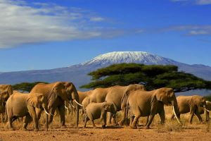 7 Days Masai mara,Nakuru & Amboseli Safari on offers