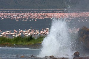 Aberdares Lake Bogoria Lake Baringo Lake Nakuru Masai Mara safari to the great lakes and wildlife hotspot