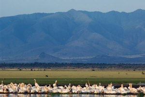 Lake Manyara Ngorongoro Safari with a difference