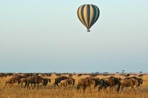 Kenya Safari 6 Days covering masai mara during migration period
