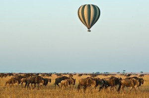 Kenya Safari 6 Days covering masai mara during migration period