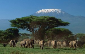 Amboseli national park - with the best mt.Kilimanjaro views
