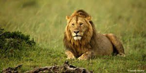 Masai Mara Safari in Kenya in3 days