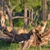 3 Days Safari Kenya Tsavo Amboseli