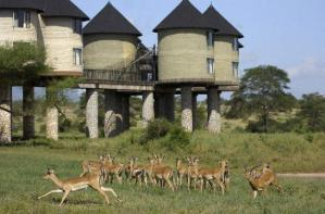 Salt lick Amboseli Safari / Salt Lick Lodge Safari Mombasa Safari