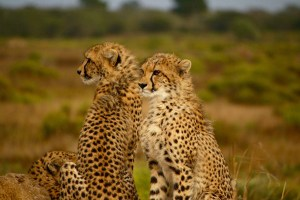 Mombasa air safari packages from Mombasa & Diani