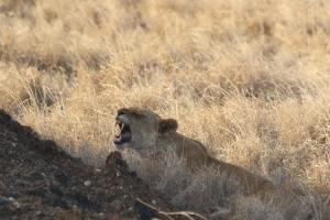 Tsavo East-West-Amboseli Safari in 4 days from mombasa