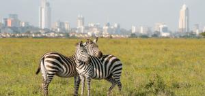 Kenya safari tour packages -Nairobi National Park Tour in half day