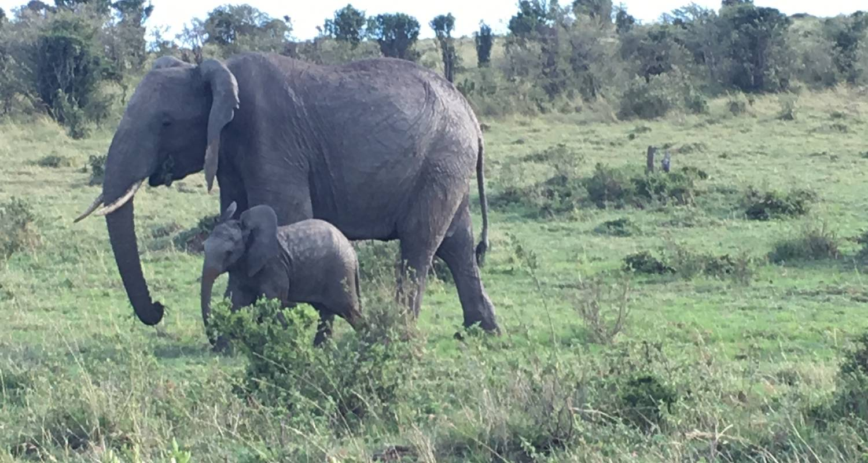 Day trip safaris Tsavo East Kenya