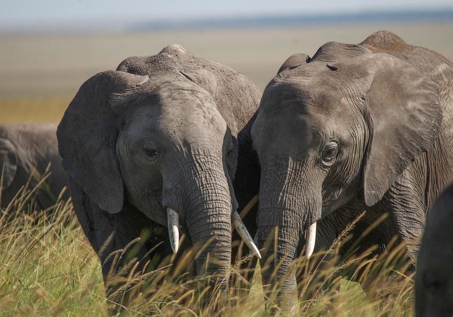 Kenya Classic Safari Tour