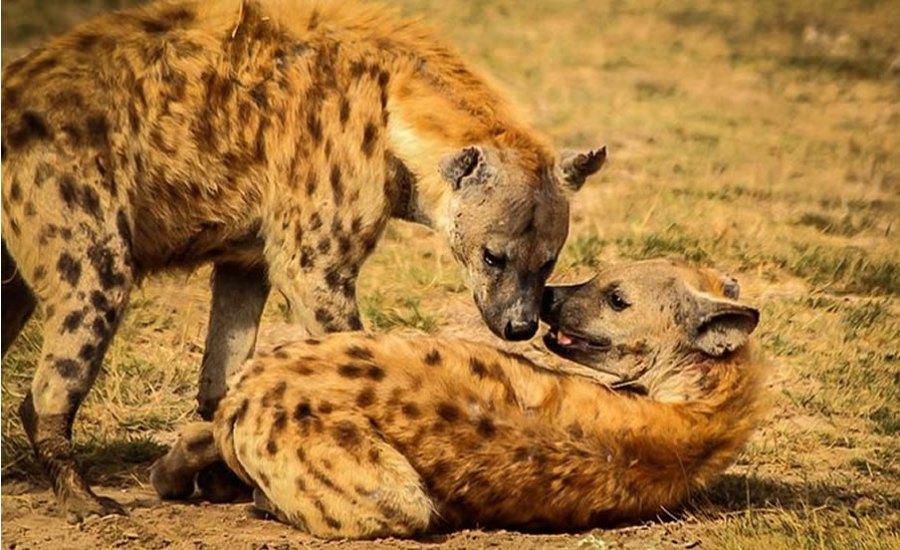 Tsavo East-West-Amboseli Safari