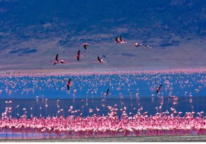 One day Lake Nakuru safari